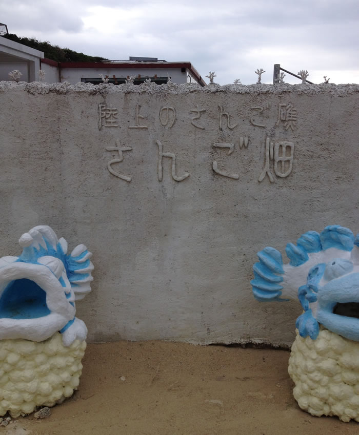 沖縄読谷村「サンゴ畑」に行って陸からサンゴを観察してみよう!
