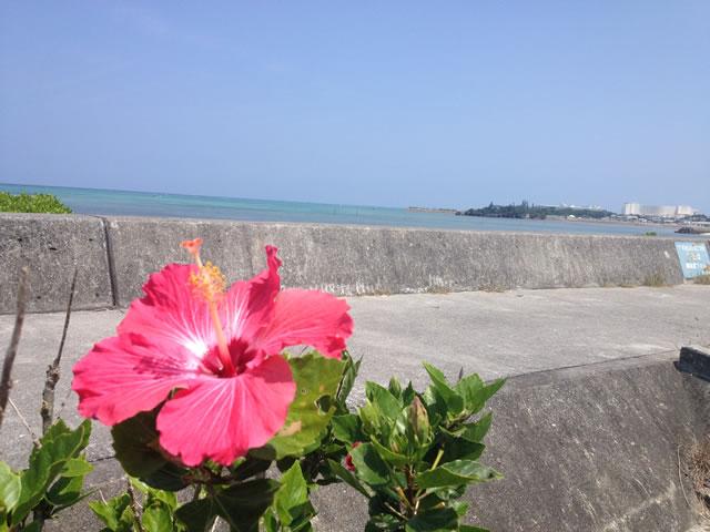 沖縄北部で物件を探す!でも北部ってどの辺でどんなところ?